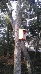 No paint - no frills, just pure bird house they way they like it.